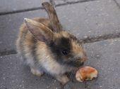 Rabbit on the sidewalk
