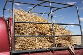 Hay in a truck