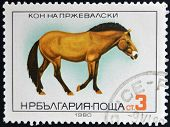BULGARIA - CIRCA 1980: A stamp printed in Bulgaria shows Przewalski's Horse circa 1980