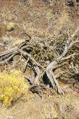 Yellow Desert Shrubs