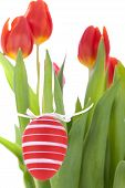 Colourful Red Easter Still Life