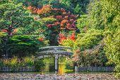 Garden at Ryoanji Temple in Kyoto