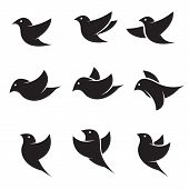 pic of swallow  - Set of vector bird icons on white background - JPG