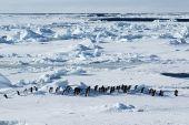 Antarctic Penguin March