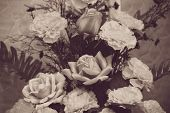 Roses. Vintage Processed.