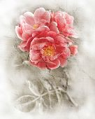 Grunge Wall Texture With Floral Background. Romantic Pink Roses Flowers. Watercolor Painting Style