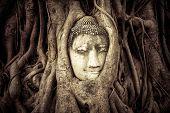 Buddha Head hidden in the tree roots