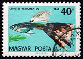 Postage Stamp Hungary 1962 Guppy, Tropical Fish