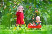 Little Children Playing In An Apple Garden