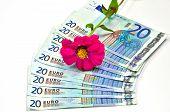Twenty Euro Banknotes