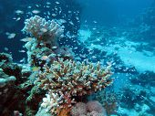 coral reef at great depth in tropical sea on blue water background