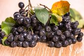 stock photo of aronia  - choke - JPG