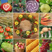Collage - Fruits And Vegetables