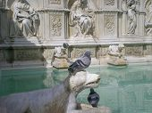 Fonte Gaia (Fountain of Joy)in Siena. Italy, Europe