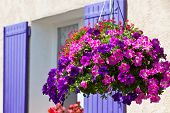 Bright Petunia Flowers On A House Wall Background