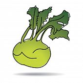 Freehand drawing kohlrabi icon - vector eps 10 illustration