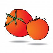 Freehand drawing tomato icon - vector eps 10 illustration