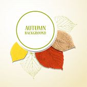 Autumn background with leaves. Linden and cherry. Vector illustration. Eps 10