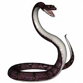 image of anaconda  - 3D rendered snake on white background isloated - JPG