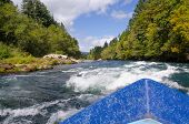 stock photo of mckenzie  - View of approaching white water on a bright summer day from a drift boat on Oregon - JPG