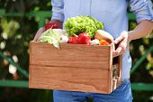 Fresh organic vegetables in wooden box in hand outdoors
