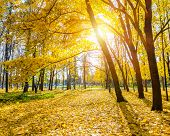 Colorful and sunny autumn park