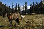 Pasture And Summer Residence Of The Nomads Of Kham, Tibet