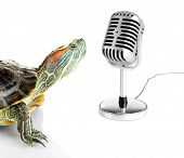 stock photo of exoskeleton  - Red ear turtle with microphone isolated on white - JPG
