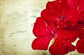 Beautiful red flower on vintage background