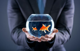 stock photo of fishbowl  - businessman holding small and big gold fish together in the fishbowl - JPG
