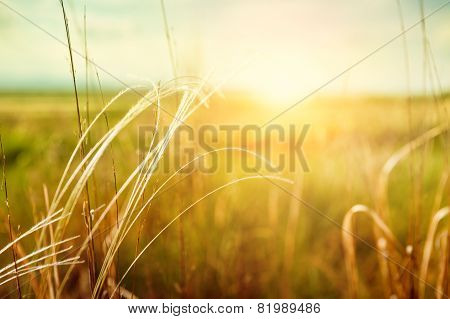 Beautiful Summer Landscape With Grass In The Field At Sunset