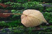 Autumn Leaf On Log In Forest