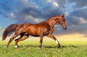 Red horse run