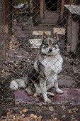 foto of begging dog  - sad dog in dog shelter in autumn - JPG