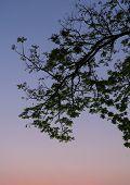 Leaf Silhouette On Twilight Sky Background