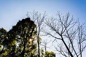 Sunbeam Shine Thru The Tropical Green Forest