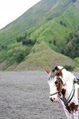 stock photo of bromo  - Horse at Bromo Tengger Semeru National Park on Java island Indonesia - JPG