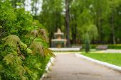 stock photo of fountain grass  - Maple leaves and tea bushes in a park on a blurred background of fountain - JPG