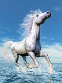 stock photo of wild horse running  - White horse running freely in the water by beautiful day  - JPG