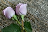 foto of purple rose  - Garden purple roses bouquet on rustic wooden table top view with copy space - JPG