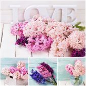 picture of blush  - Collage with fresh blush pink hyacinths on white wooden planks - JPG