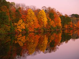picture of bucks  - Vivid Autumn foliage is reflected in still lake in the golden hour with periwinkle sky - JPG