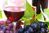 pic of grape-vine  - wine in glass - JPG