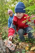 picture of face-fungus  - children explore shelf fungus - JPG