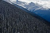 Alpine Forrest, Blackcomb Mountain