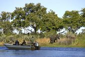 African Elephants By Boat