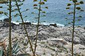 Plants, Rocks And Sea poster