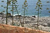 Wild Plants, Rocks And Sea poster