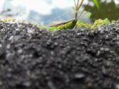 These Locusts Hide Behind Rocks To Avoid Predators poster