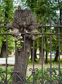 Freak Tree Into Fence